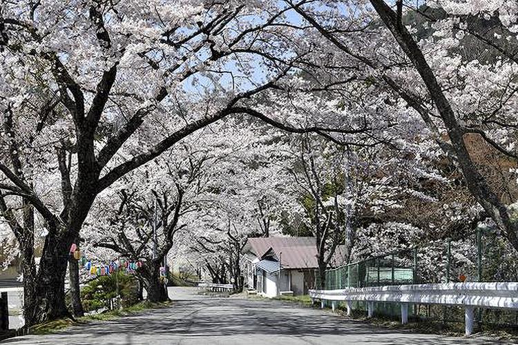 コミュニティの森(阿南町)