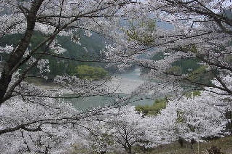 仁善寺・伊那小沢(天龍村)