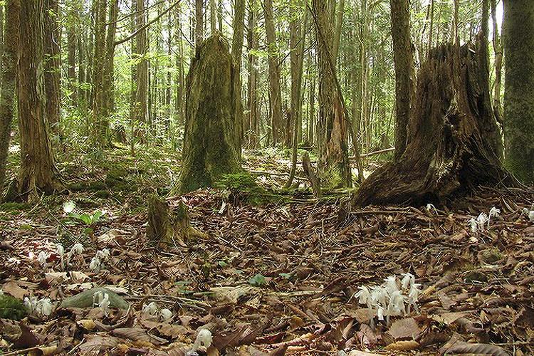 茶臼山自然園 アテビ平 小鳥の森 (売木村)
